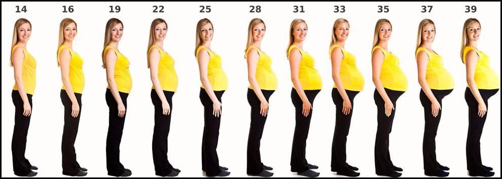 اسابيع الحمل