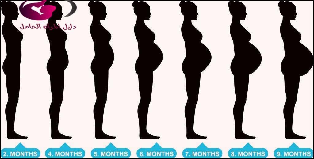 شكل الجنين في الشهر الثالث